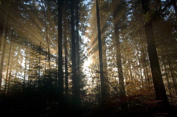 Sonnenaufgang im Wald bei Hirschhorn [UKR20111122_0072]