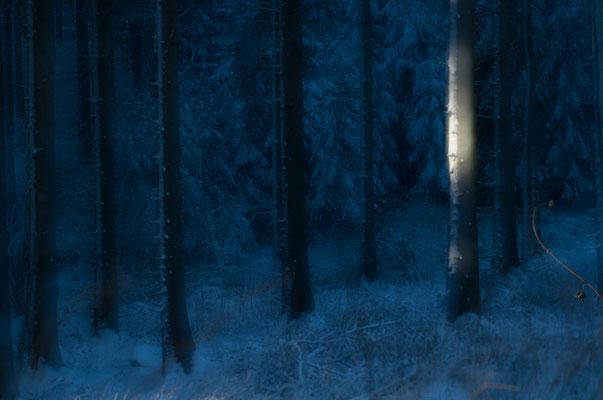 Der letzte Sonnenstrahl bringt den verschneiten Baumstamm zum Glühen [UKR20170107_0072]