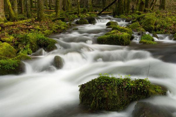 Nach der Schneeschmelze verwandelt sich der sonst so zahme Weisbach in schäumendes Wildwasser (Odenwald) [UKR20090329_0009]