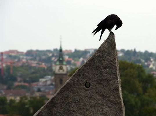 Ansichten einer Krähe (Stuttgart) [UKR20091109_0278]