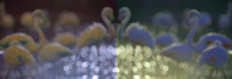 Colouringos im Licht [UKR20190709_0498]
