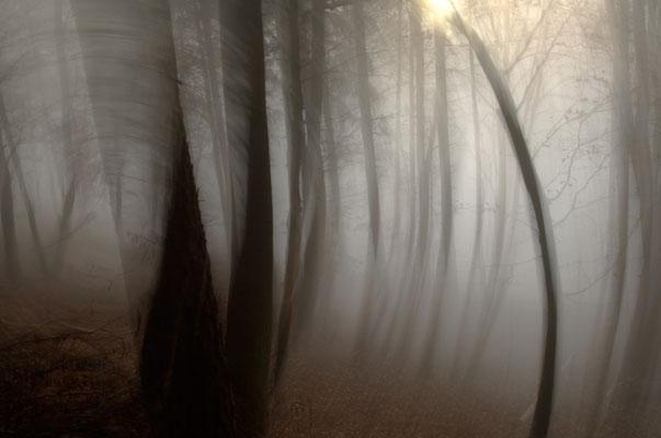 Irrlicht im Nebel [UKR20111122_0240]