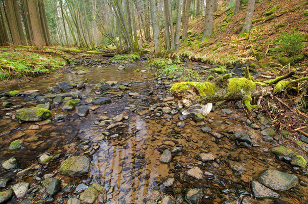 Silikatischer Mittelgebirgsbach Im Odenwald [UKR20120411_0129]