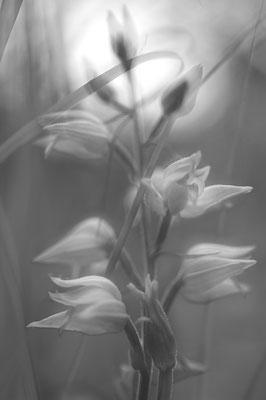 Pflanzen tanzen [UKR20170609_0051]