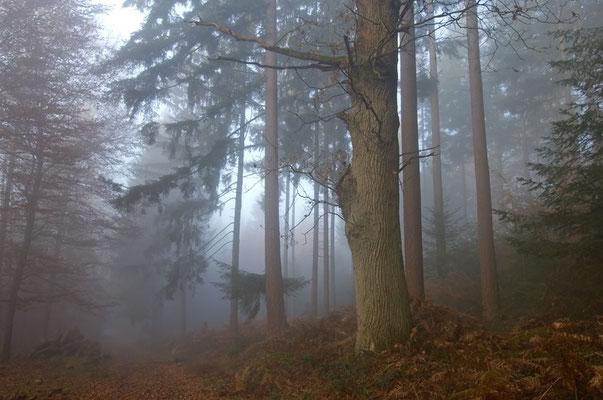 Nebelstimmung im Wald (Odenwald) [UKR20111122_0289]