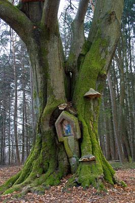 """Das Naturdenkmal """"Bullauer Bild"""" existiert in dieser Form leider nicht mehr (Odenwald) [UKR20100318_0203]"""