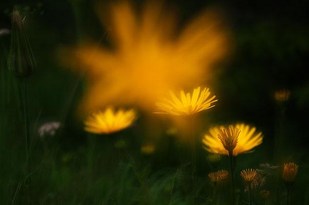 Blütenglühen [UKR20180614_0394]
