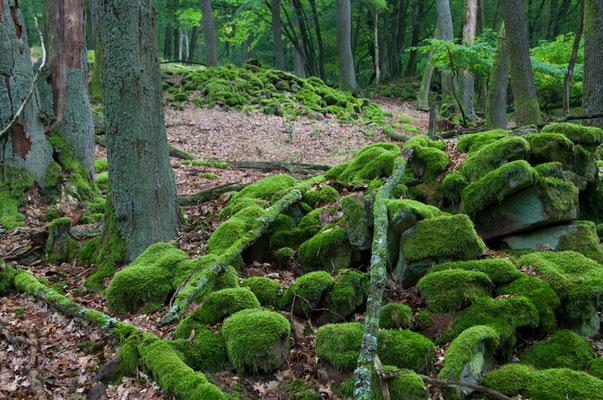 Lesesteine im Bannwald bei Eberbach [UKR20080822_0320]