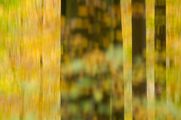 Die vertikale Kamerabewegung läßt das gelbe Laub von den Bäumen fließen [UKR20101027_0018]