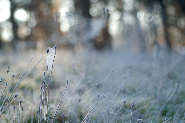 Über Nacht bedeckt der Raureif die Wiese mit einem hauchzarten Tuch aus kalter Seide [UKR20111122_0205-1]