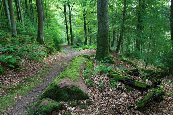 Die versteckt liegenden Heunesäulen sind Naturpark-Geotop des Jahres 2008 (Odenwald) [UKR20120717_0093]