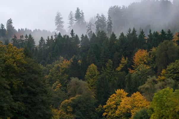 Herbstimpressionen (Odenwald) [UKR20081003_0025]
