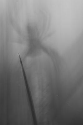Black spider [UKR20180626_0540]