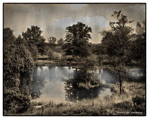 """Pastorenteich in Wesel, Lüneburger Heide. aufgenommen mit Toyo Field 4x5"""" auf Ilford HP5, digitale Weiterverarbeitung."""