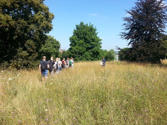 Die Gruppe streifte über die Fläche und während der Exkursionsleiter Fakten gefundenen Insekten aller Art lieferte, wurden mit Schmetterlingsnetzen einige Exemplare zur Ansicht eingefangen.