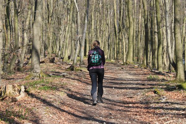 Bald war der Buchenwald erreicht, der den Freeden umgibt. Der Boden war, abgesehen von totem Laub, kaum von Pflanzen bedeckt und die Bäume noch kahl.