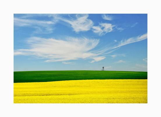 Naturkontraste  -  Die Naturfarben  des Mecklenburger Sommers;  gelb, grün, blau und weiß.   Bildgröße: 30 x 45 cm       Bildnummer:   016 / R