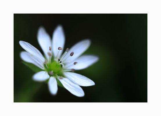 Stempelkissen  -  Bildgröße: 30 x 45 cm       Bildnummer:   006 / K
