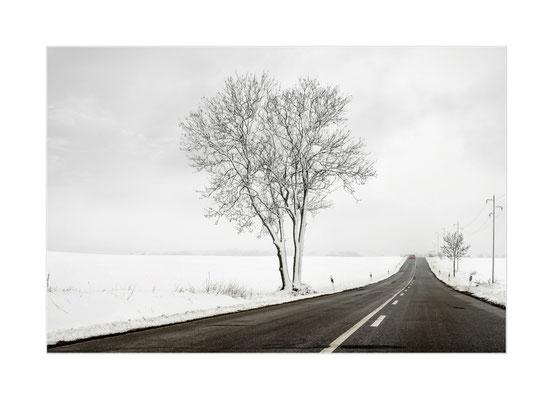Winterland  14