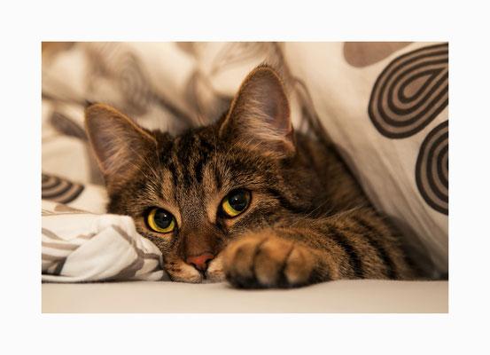 """Lieblingsplatz -  Die  Katze """"Emma""""  auf einem ihrer zahlreichen Lieblingsplätze.   Bildgröße: 30 x 45 cm       Bildnummer:   007 / S"""