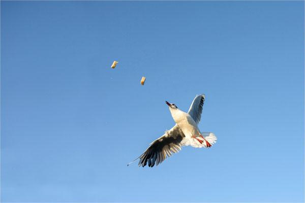 Flugfütterung
