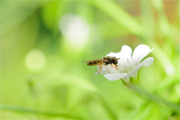 lecker Blütenstempel