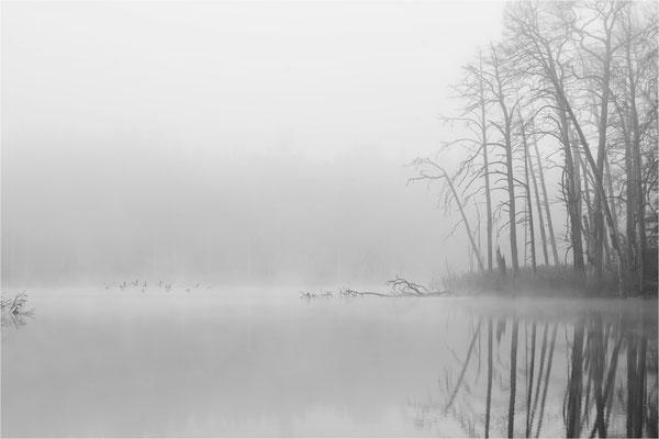 Frühnebel über dem Schweingartensee