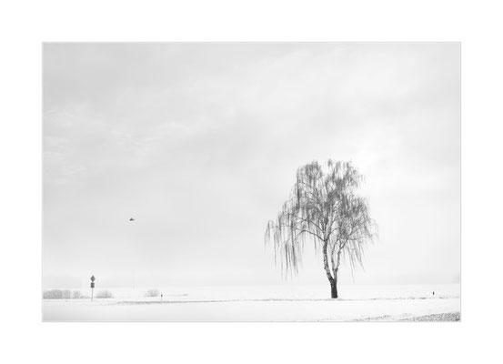 Winterland  8