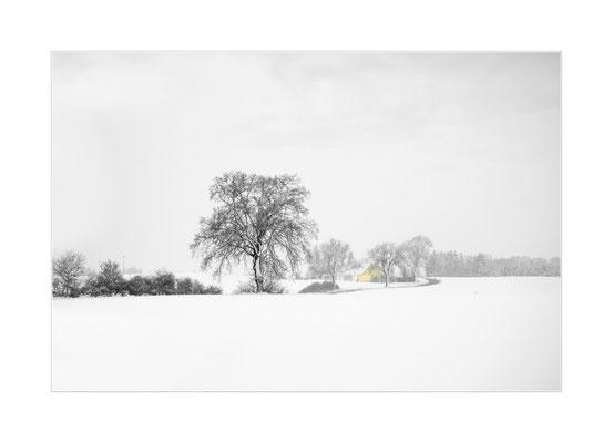 Winterland  4