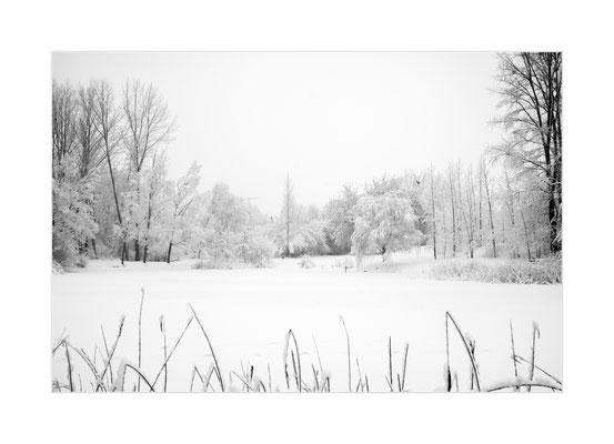 Winterland  12