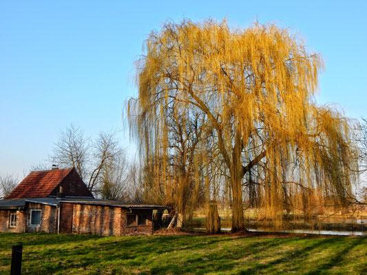 März 2015, Foto: Wolfgang Linke