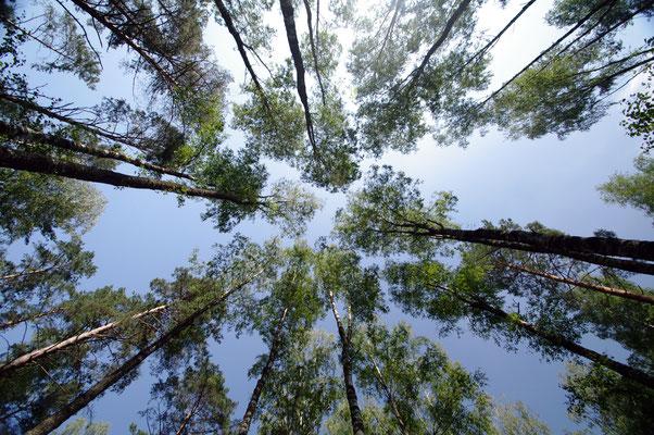 Wald in Masuren © 2014 Stefan Pompetzki