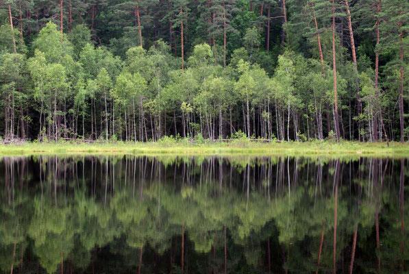 Spiegelspiel am See © 2014 Stefan Pompetzki