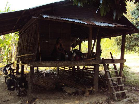 Un abri en bambou au milieu des bananiers