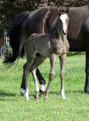 Tacheles von Niagara, 3 Wochen alt