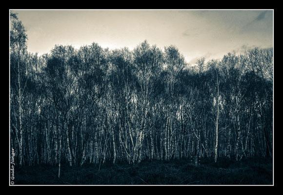 #076 Drover Heide
