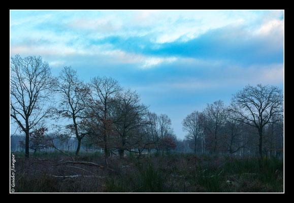 #077 Drover Heide