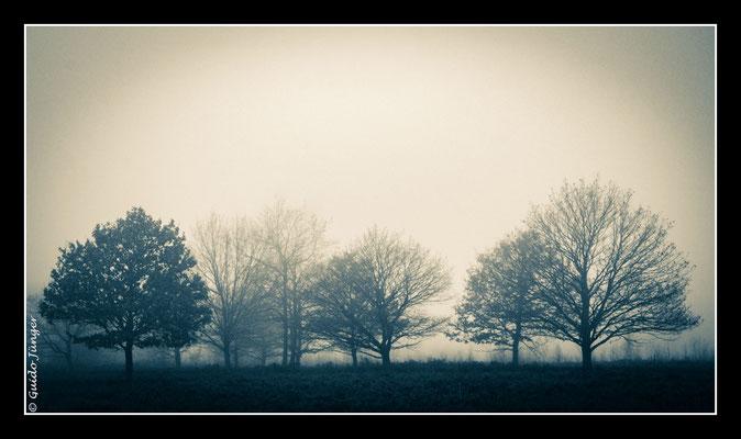 #080 Drover Heide