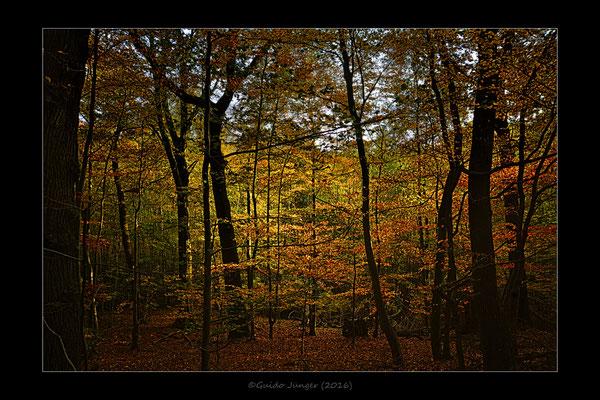 Meroder Wald