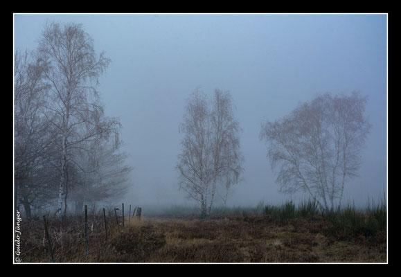 #078 Drover Heide