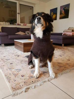 Hundebademantel braun von Hundeleinen-und-mehr