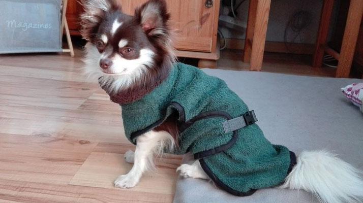 Hundebademantel grün von Hundeleinen-und-mehr