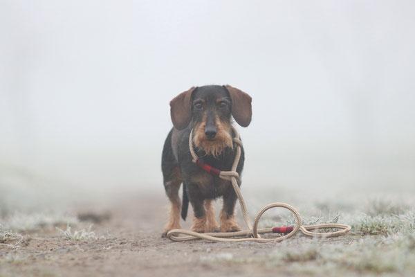 Hundeleine beige von Hundeleinen-und-mehr