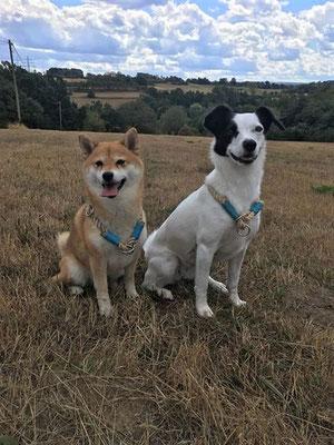 Halsbänder von Hundeleinen-und-mehr
