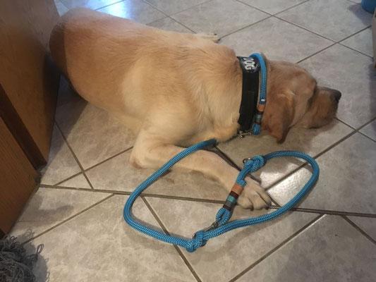 Hundeleine 12 mm von Hundeleinen-und-mehr