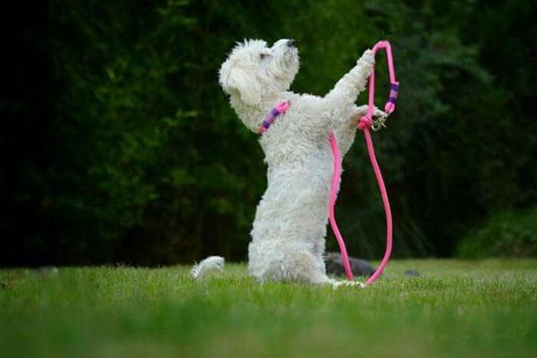 Hundeleine pink von Hundeleinen-und-mehr