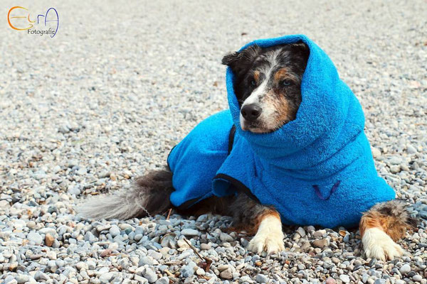 Hundebademantel blau von Hundeleinen-und-mehr