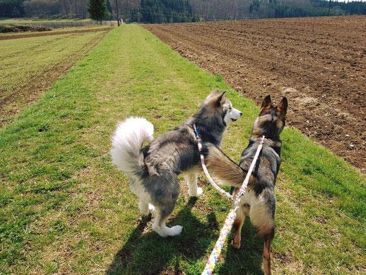 Koppelleine von Hundeleinen-und-mehr