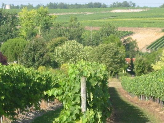 Wijngaard Maxime Trijol