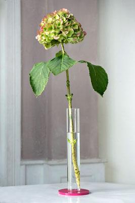 Amaryllis Vase TELEMAGENTA mit Hortensie